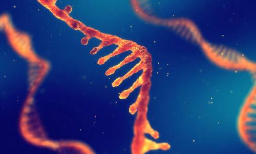 Amiloidosi Sintomi Cause