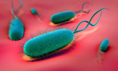 Sintomi Helicobacter Pylori